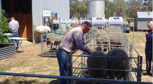 Stirling sale 2015 Photo 2