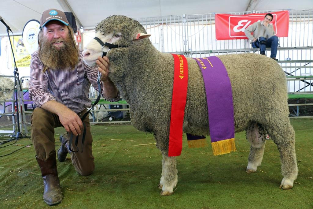 Murray Rogerson, Stirling Dohnes, Glenthompson, Vic, exhibited the reserve grand champion Dohne ram at the Australian Sheep and Wool Show By Outcross Media
