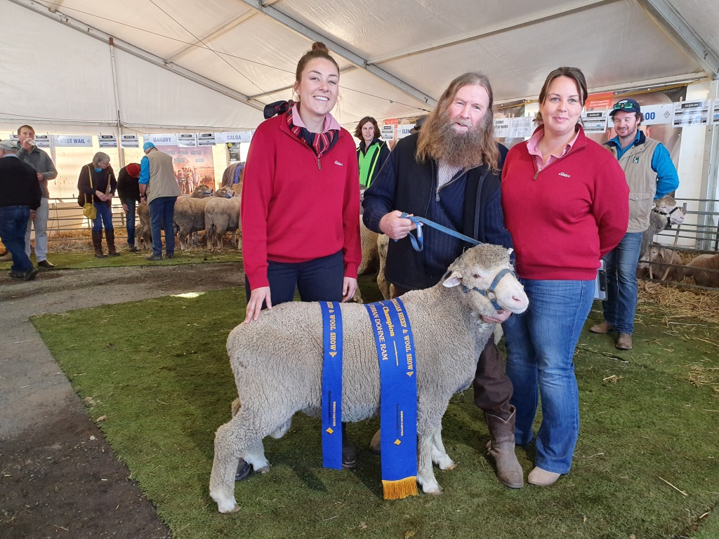 2019 Australian Sheep Wool Show Stirling Dohne Merino
